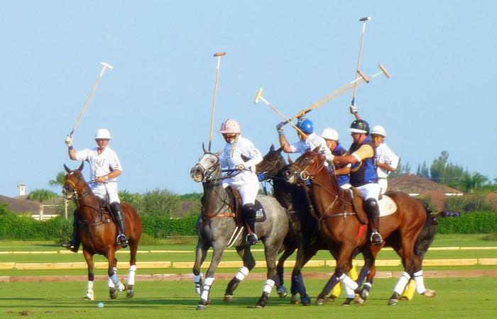 South Florida Equestrian Estates and Horse Farms