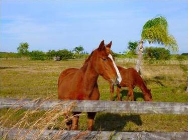 comm-equestrian-real-estate