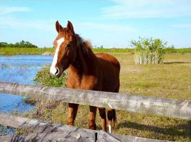 comm-horseshoe-acres