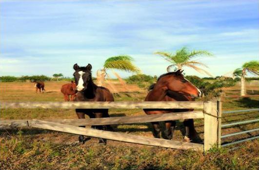 LRP_Frame (Equestrian & Farm) web